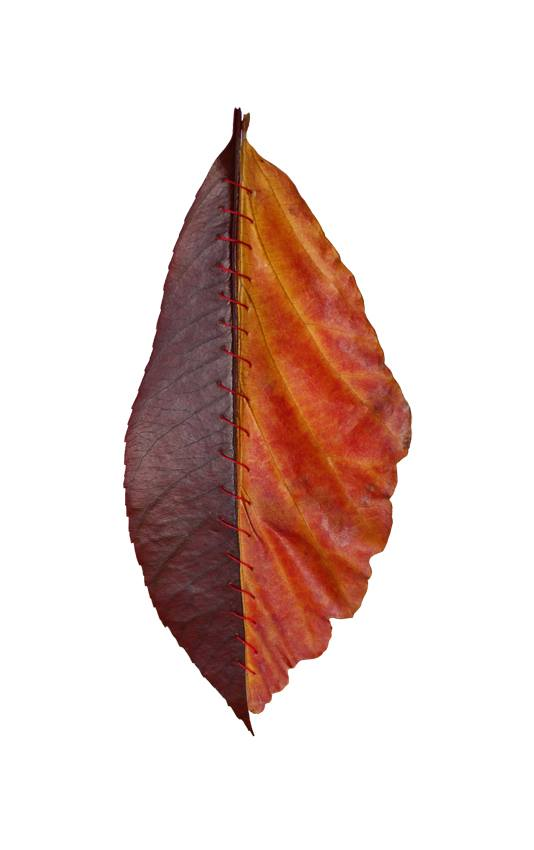 chimere-automne-feuille-06