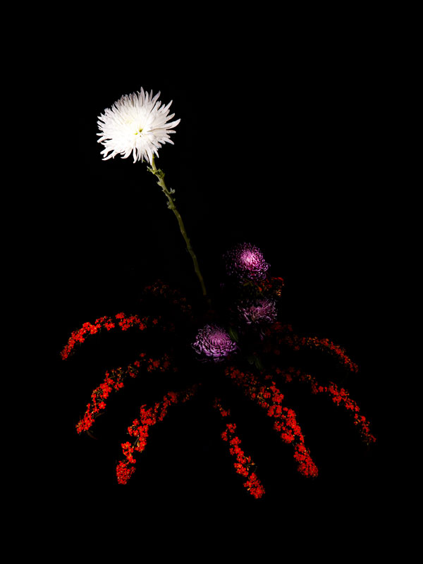 fleur-feu-artifice-01