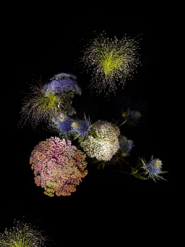 fleur-feu-artifice-02