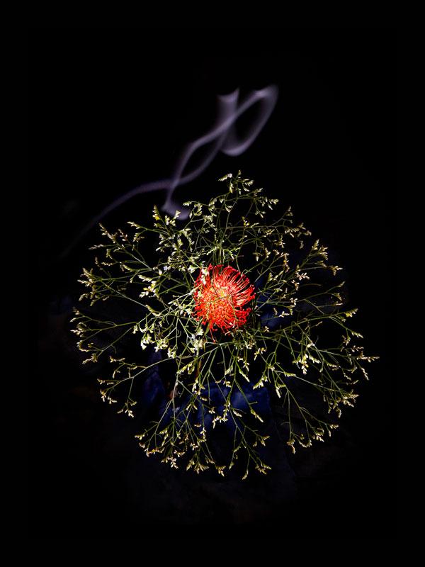 Fleur Feu Artifice 03 La Boite Verte