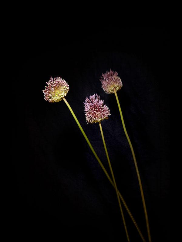fleur-feu-artifice-04