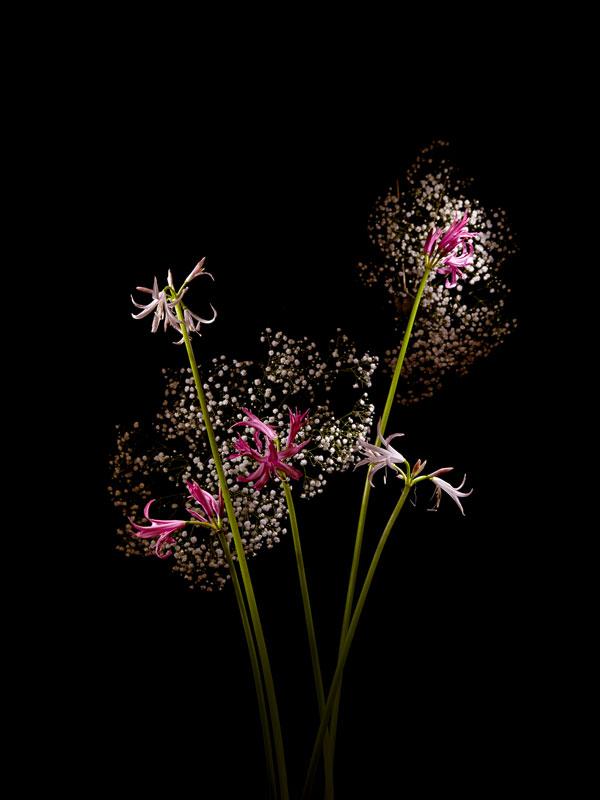 Fleur Feu Artifice 05 La Boite Verte