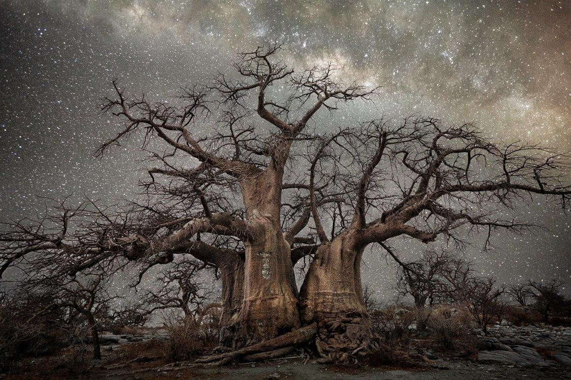 vieu-arbre-etoile-01