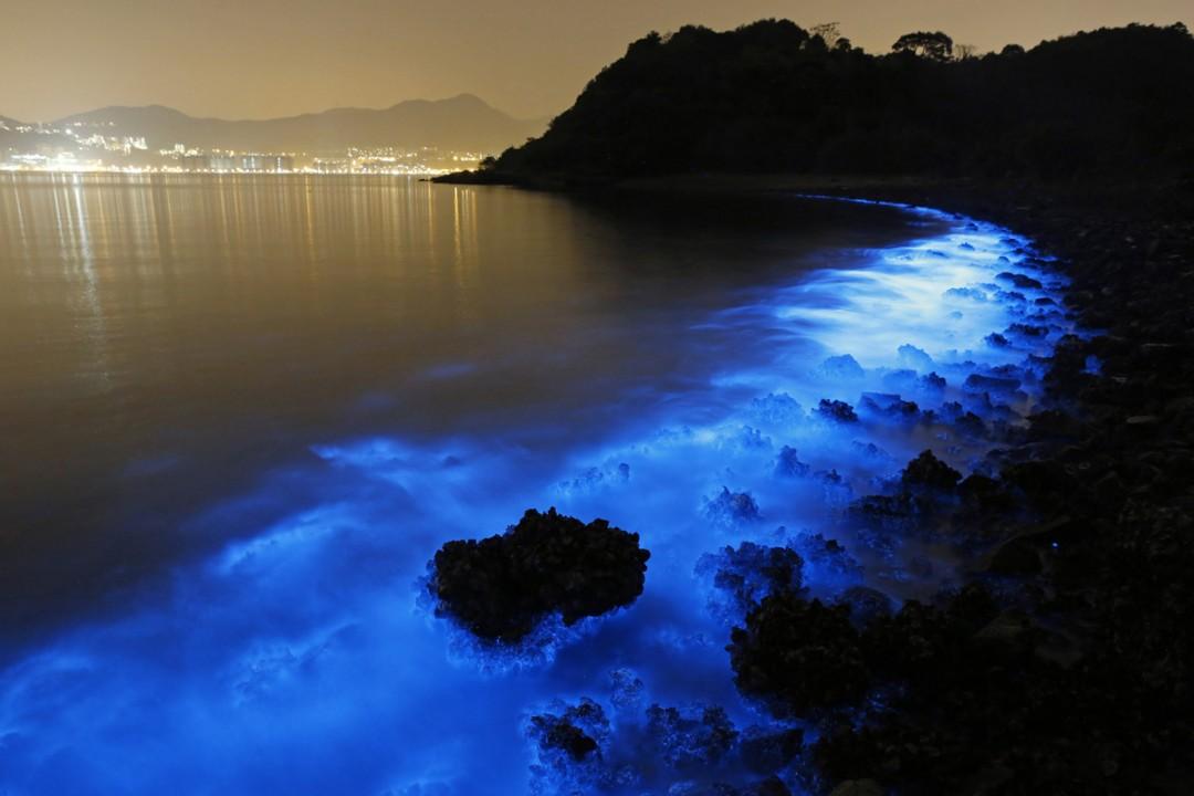 algues-fuorescentes-hong-kong-ocean-01