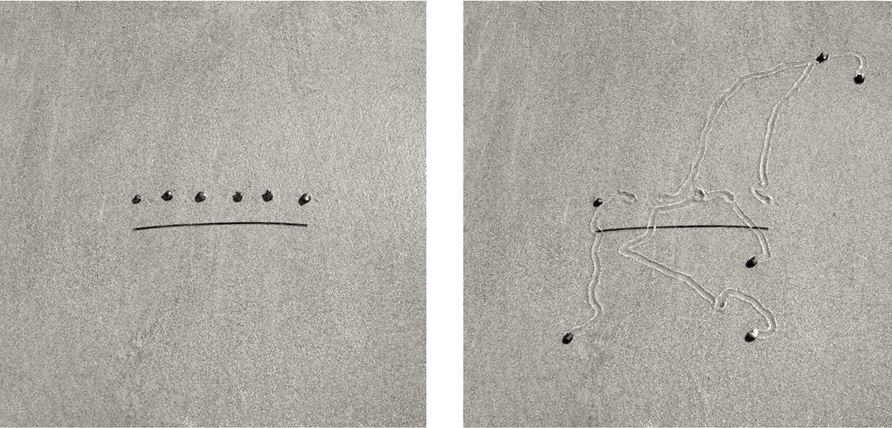art-escargot-sable-02