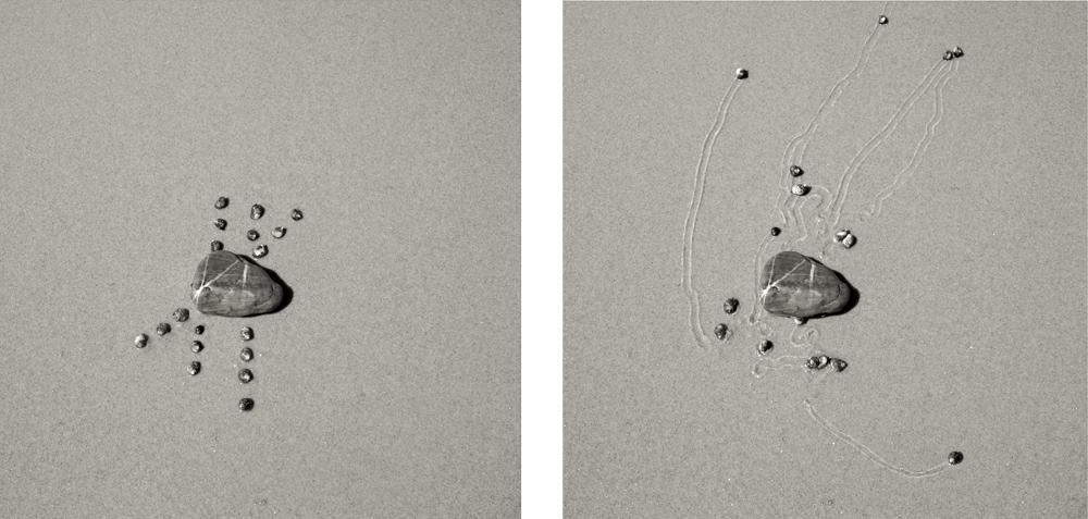 art-escargot-sable-06