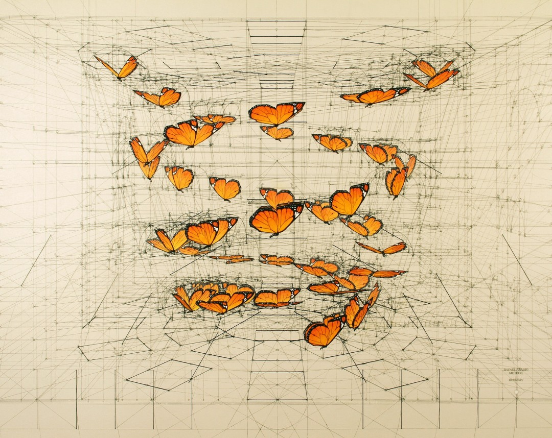 dessin-papillon-coquillage-01