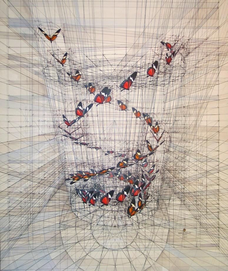 dessin-papillon-coquillage-02