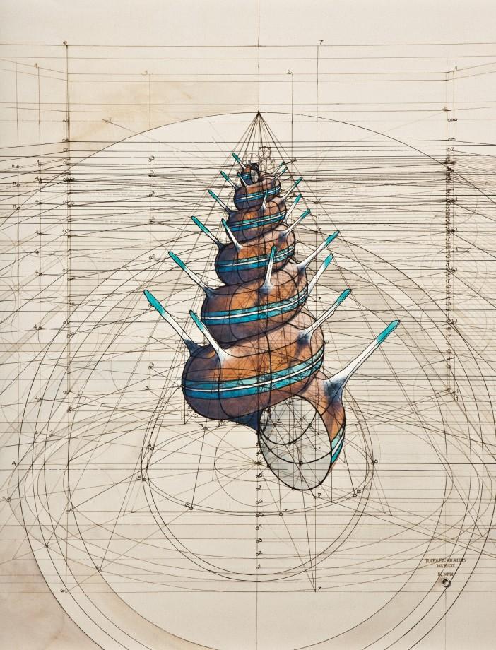 dessin-papillon-coquillage-05