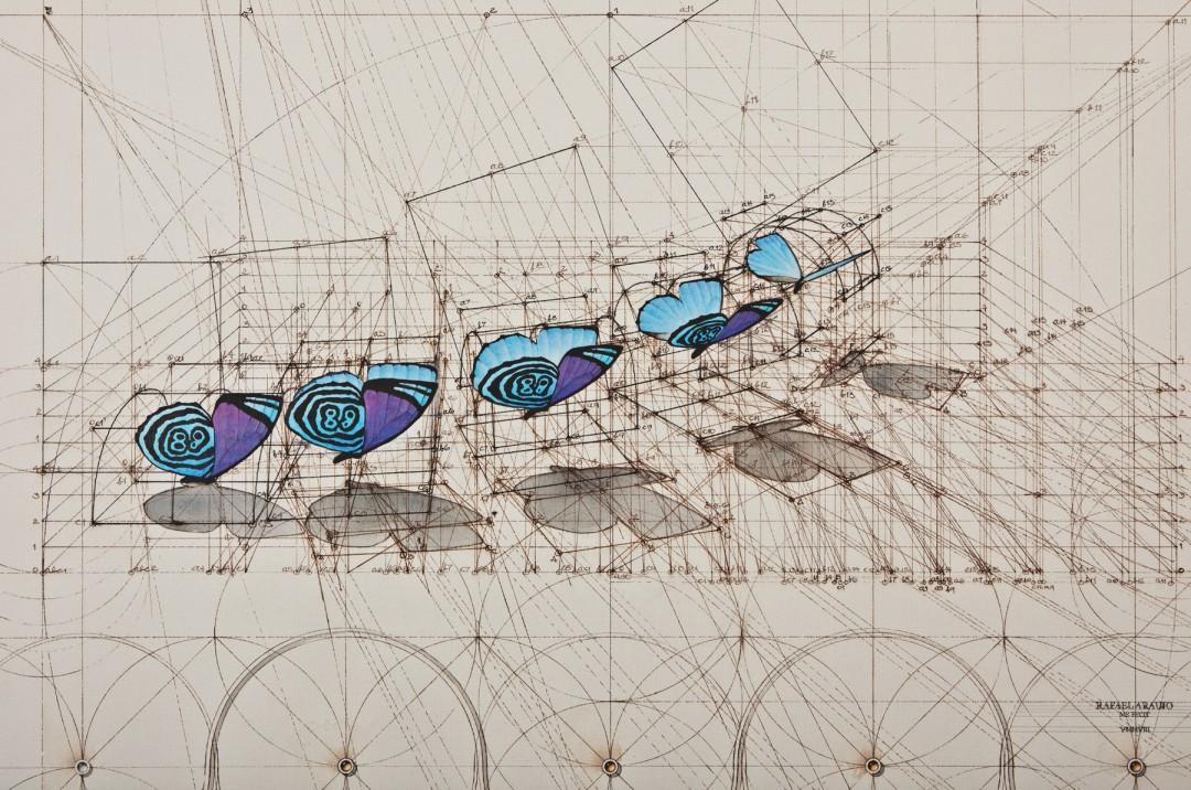 dessin-papillon-coquillage-06