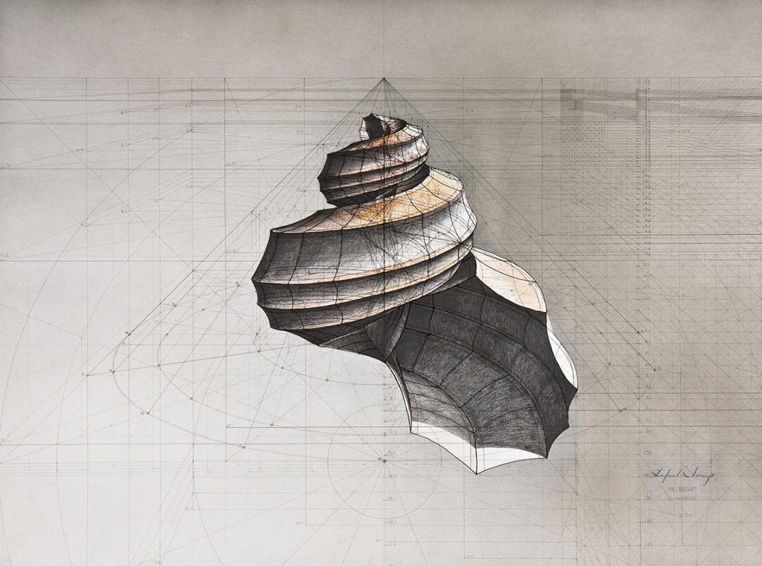dessin-papillon-coquillage-08