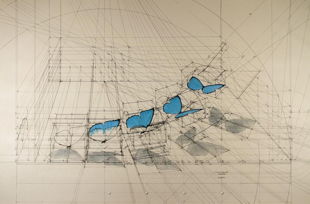 dessin-papillon-coquillage-09