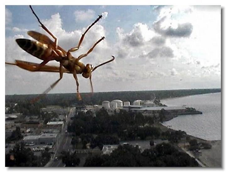 insecte-webcam-01