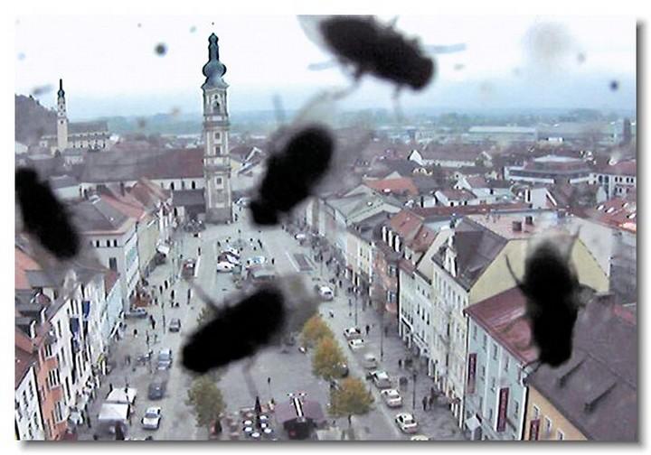 insecte-webcam-02