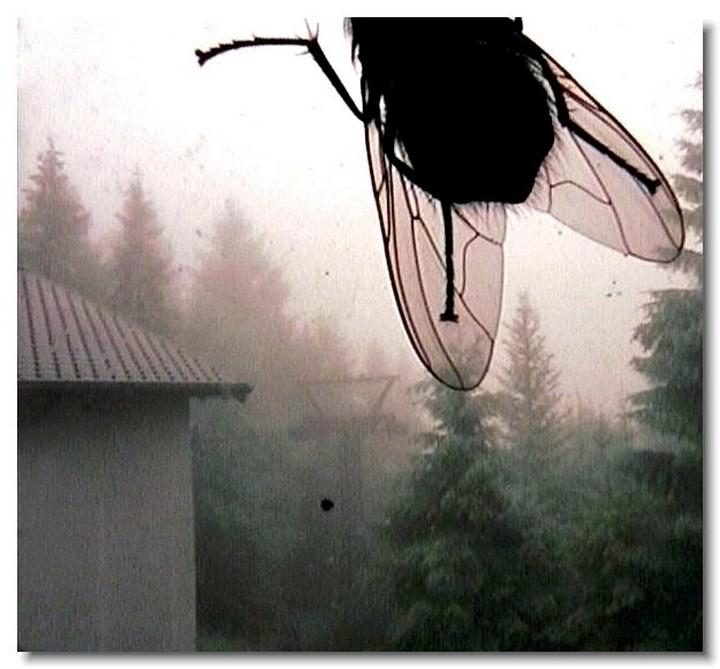 insecte-webcam-03