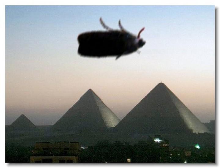 insecte-webcam-04