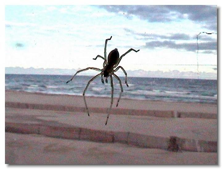 insecte-webcam-05