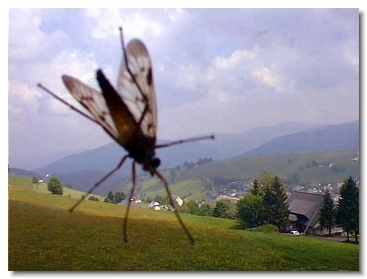 insecte-webcam-06