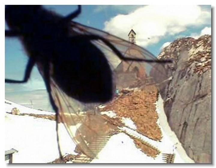 insecte-webcam-07