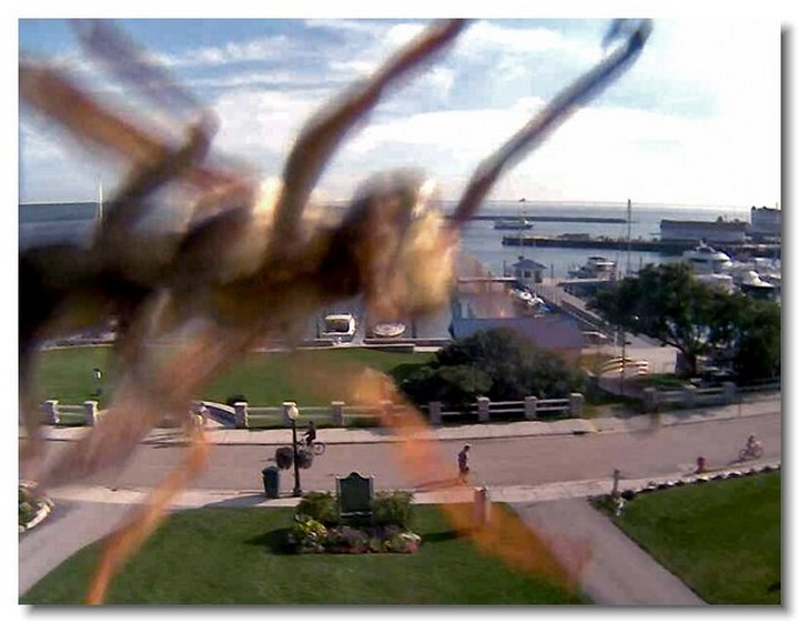 insecte-webcam-08