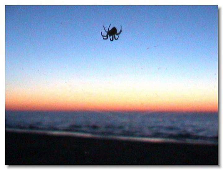 insecte-webcam-09