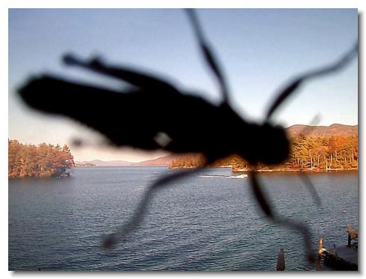 insecte-webcam-10