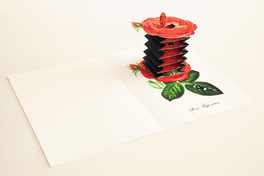 livre-popup-fleur-07