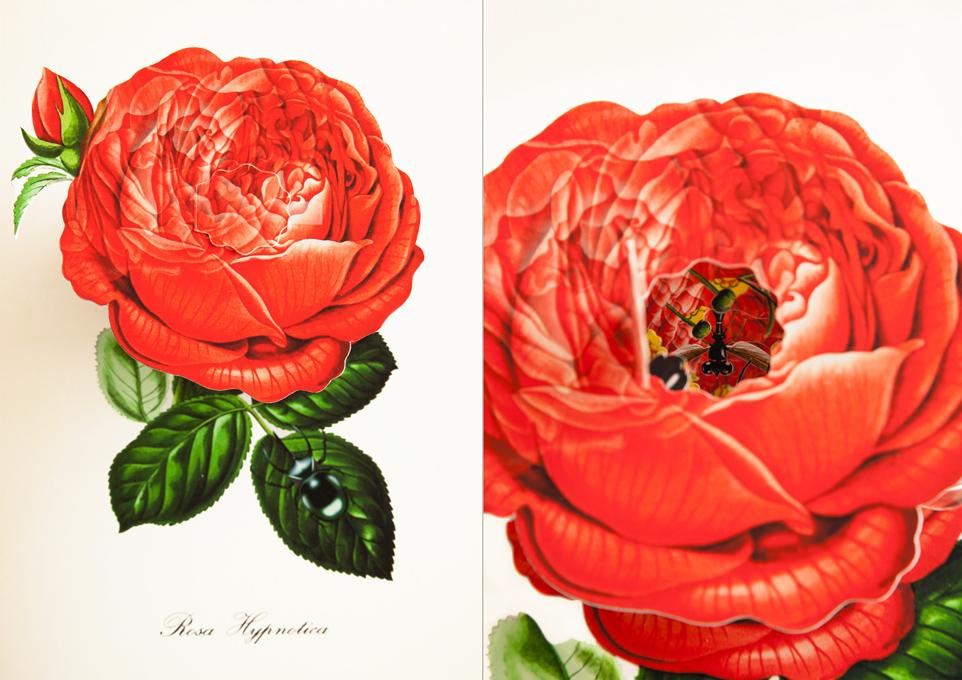 livre-popup-fleur-08