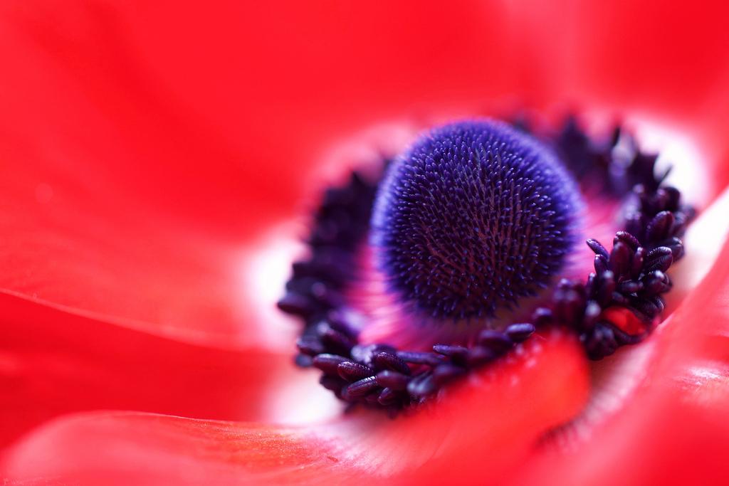 meilleure-image-flickr-04