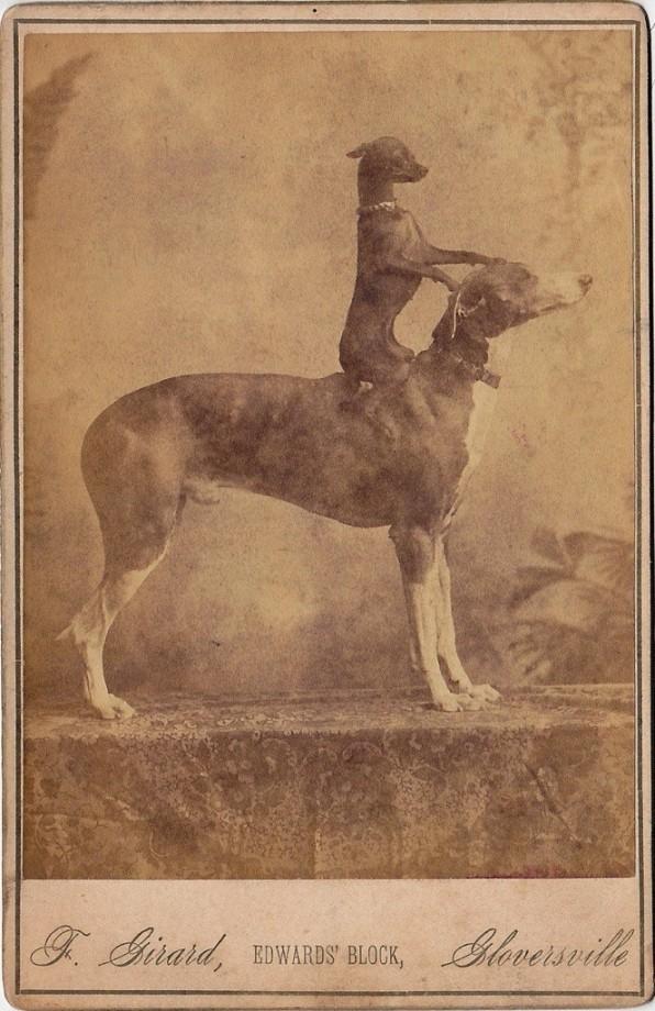 photo-chien-ancienne-01