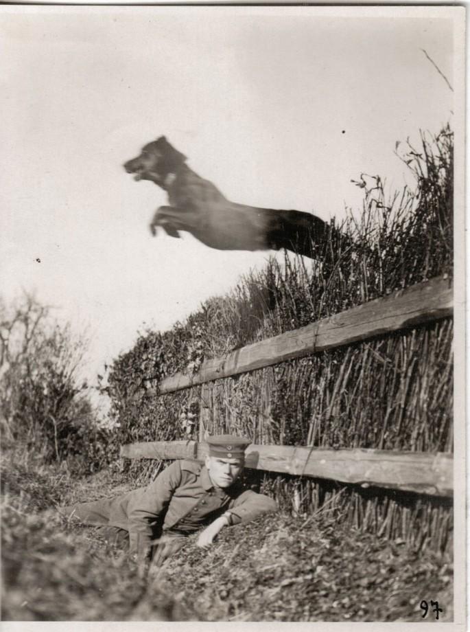 photo-chien-ancienne-15