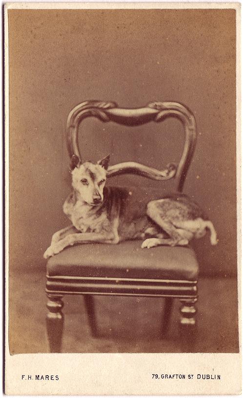 photo-chien-ancienne-17