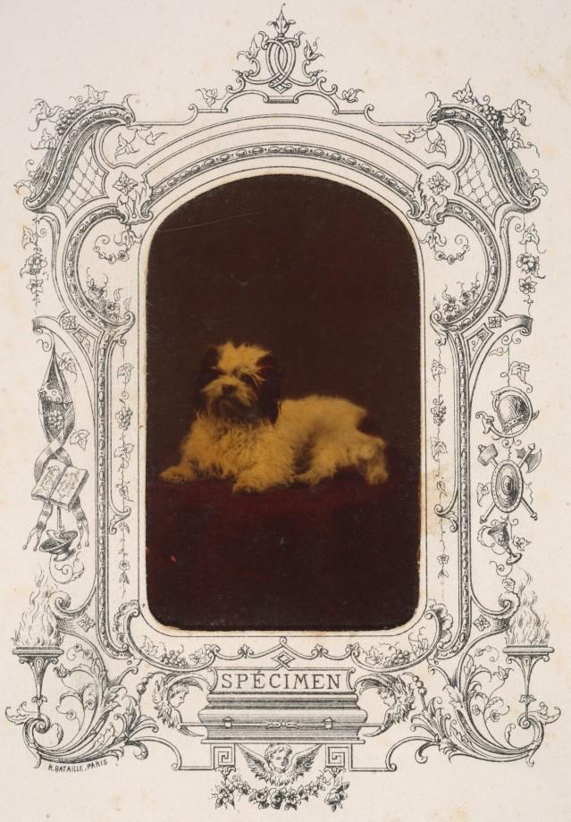 photo-chien-ancienne-19