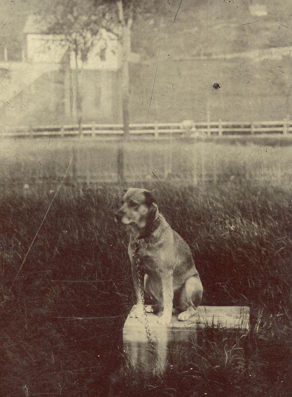 photo-chien-ancienne-21