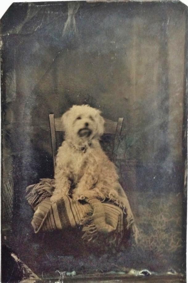 photo-chien-ancienne-22