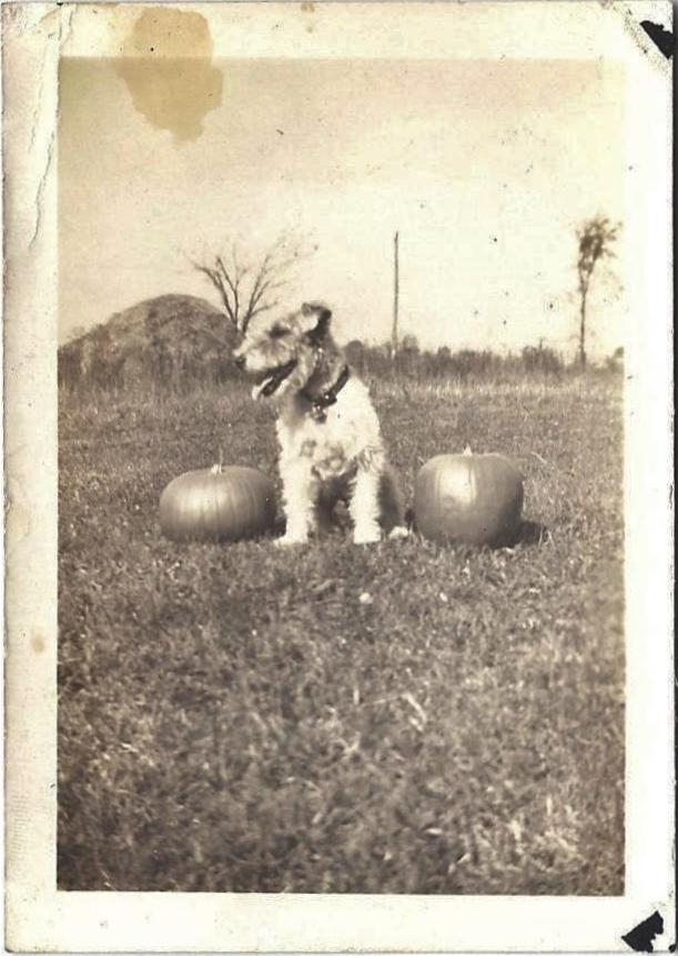 photo-chien-ancienne-24