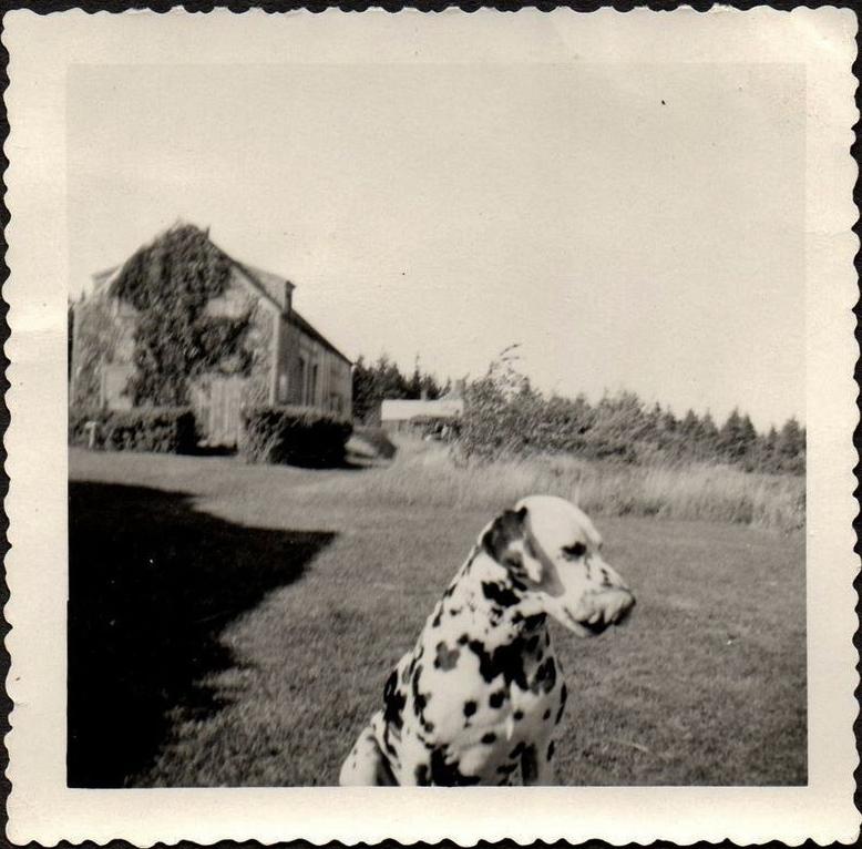 photo-chien-ancienne-25