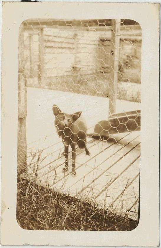 photo-chien-ancienne-27