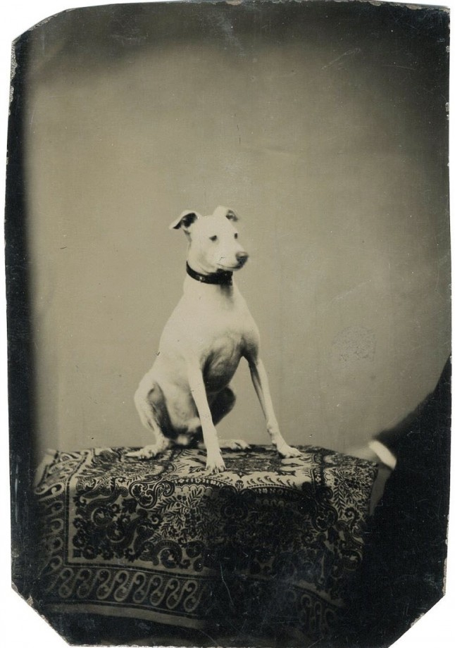photo-chien-ancienne-31