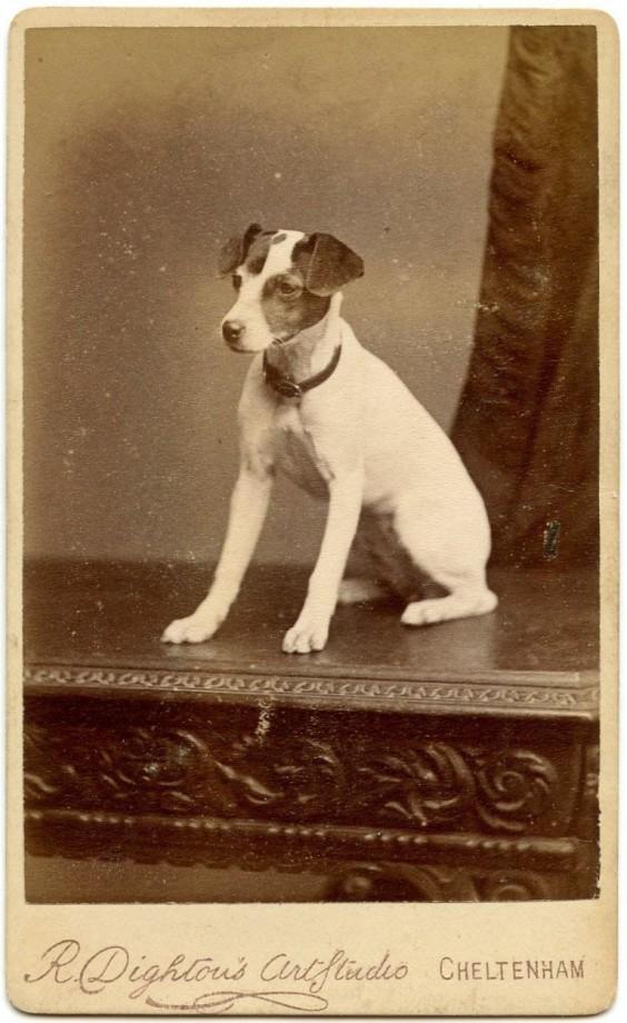photo-chien-ancienne-33