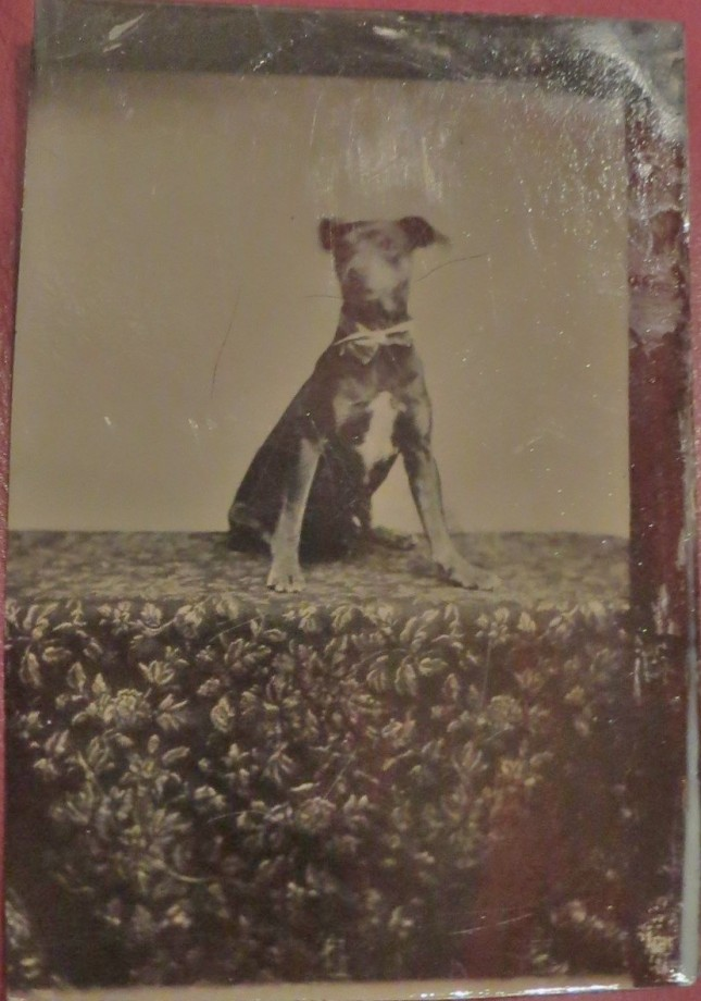 photo-chien-ancienne-36