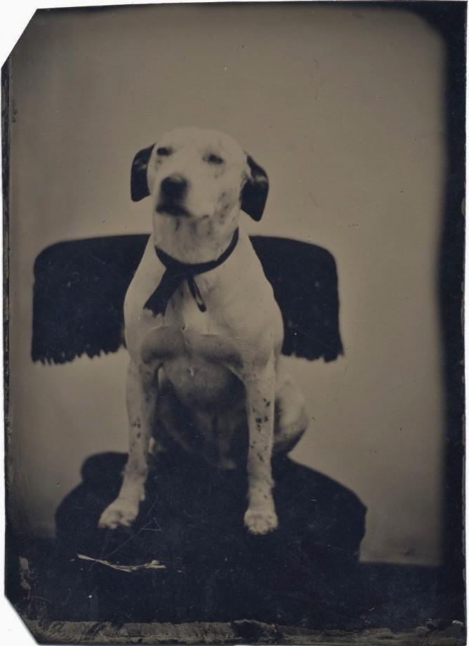 photo-chien-ancienne-38