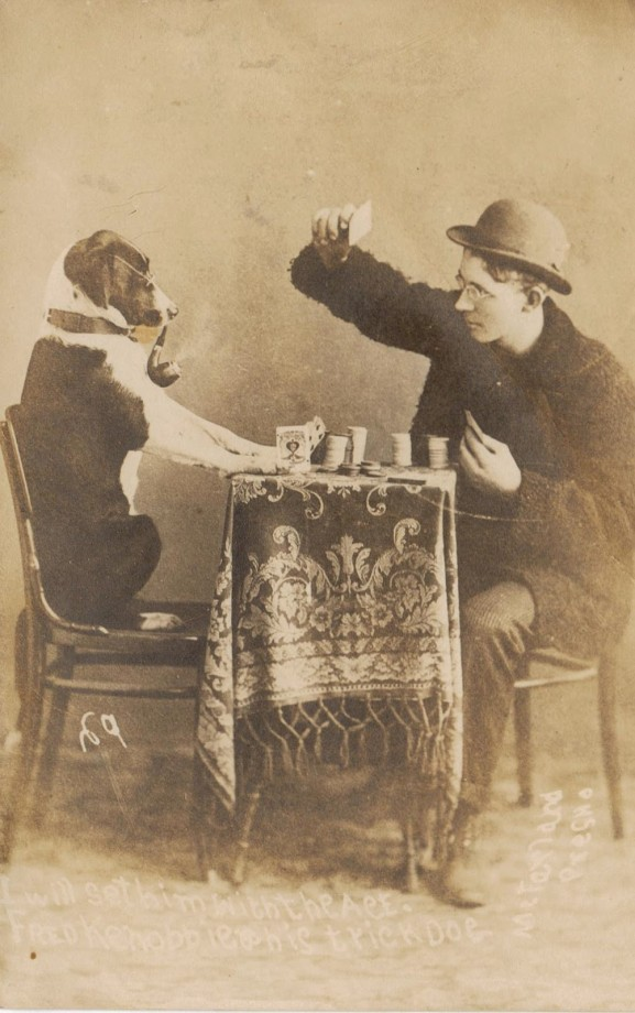 photo-chien-ancienne-39