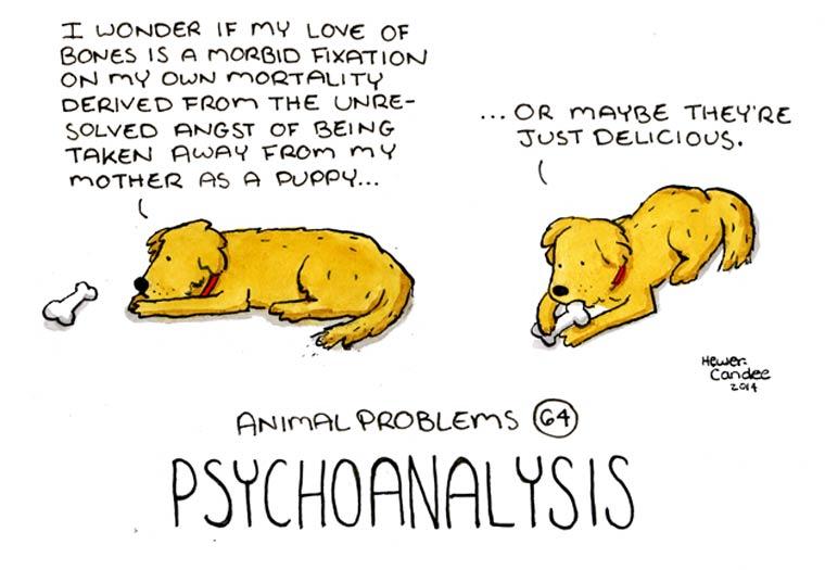 probleme-animal-14