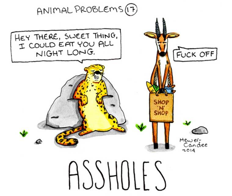 probleme-animal-17