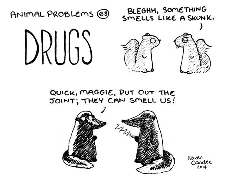 probleme-animal-21