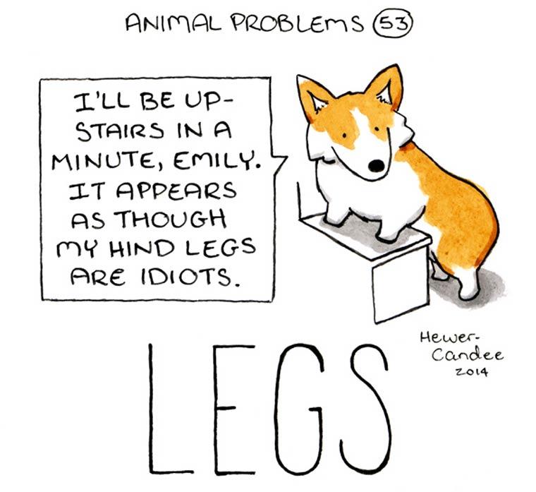 probleme-animal-22