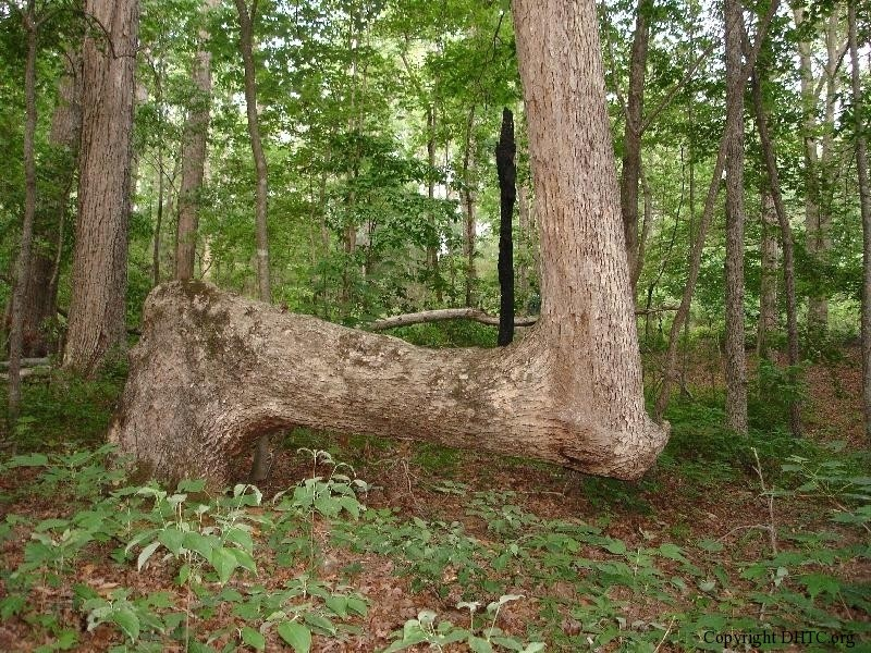 arbre-balise-sentier-maruqe-amerindien-02
