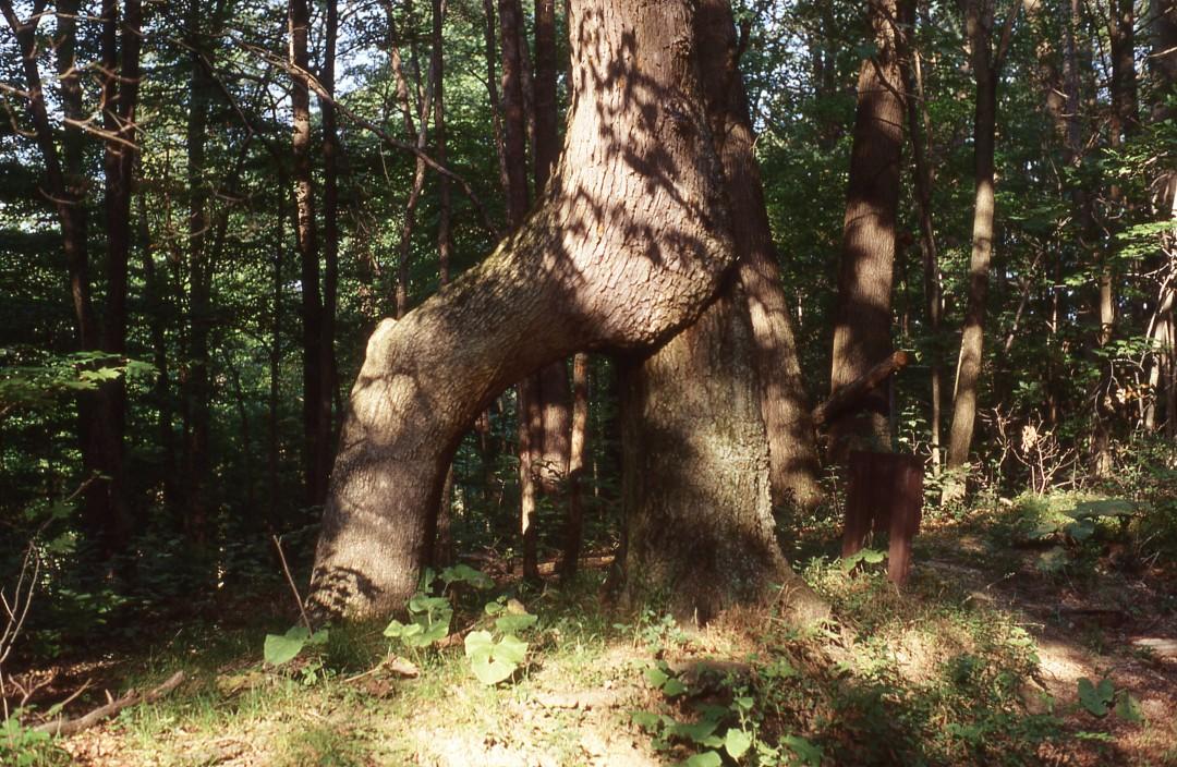Indian Signal Tree Camp Manatoc