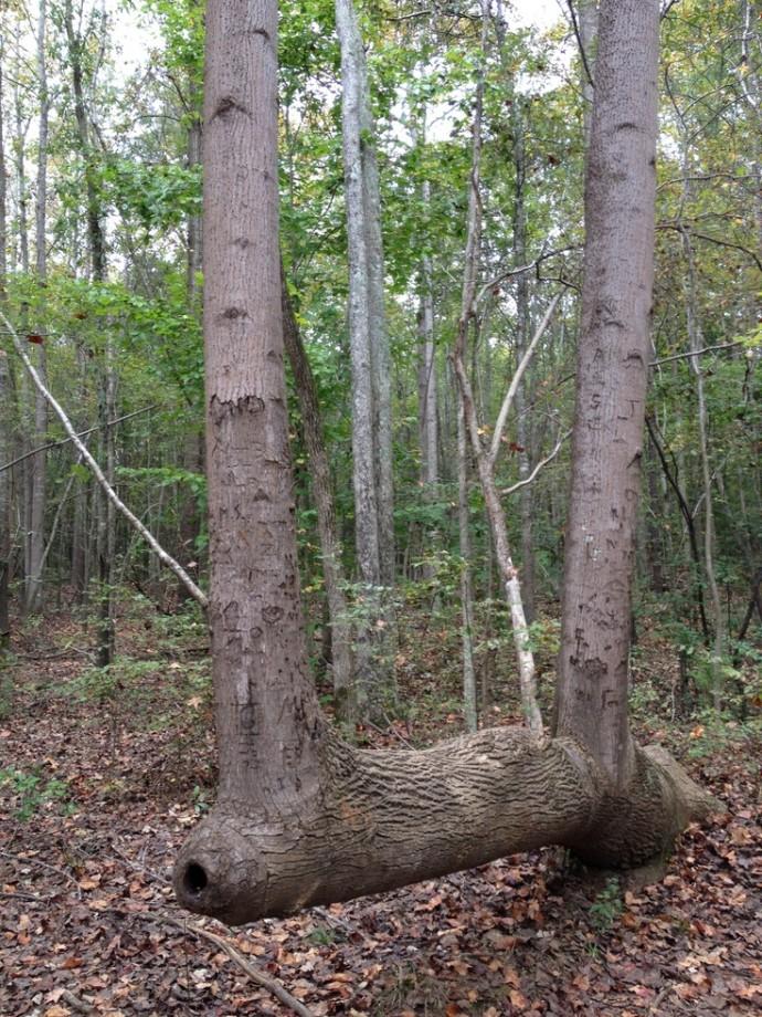 arbre-balise-sentier-maruqe-amerindien-04